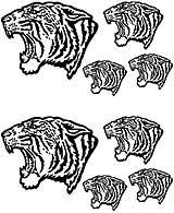 Msct-TigerHead.jpg