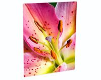 "Unisub Chromaluxe 16""x20"" Matte White Aluminum Photo Panel"